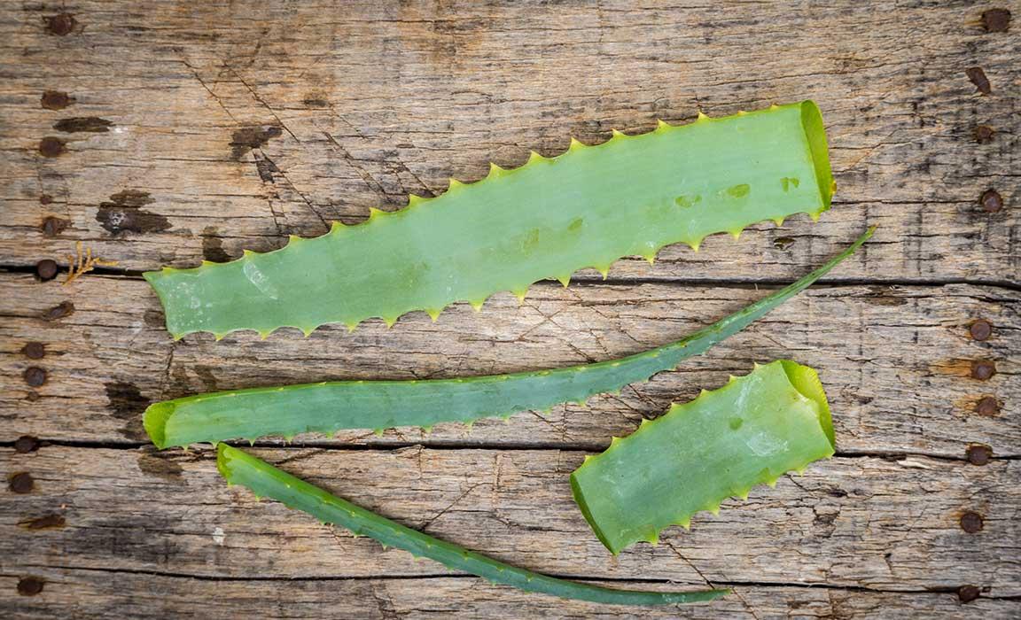 Aloe Vera is not just for Sunburns