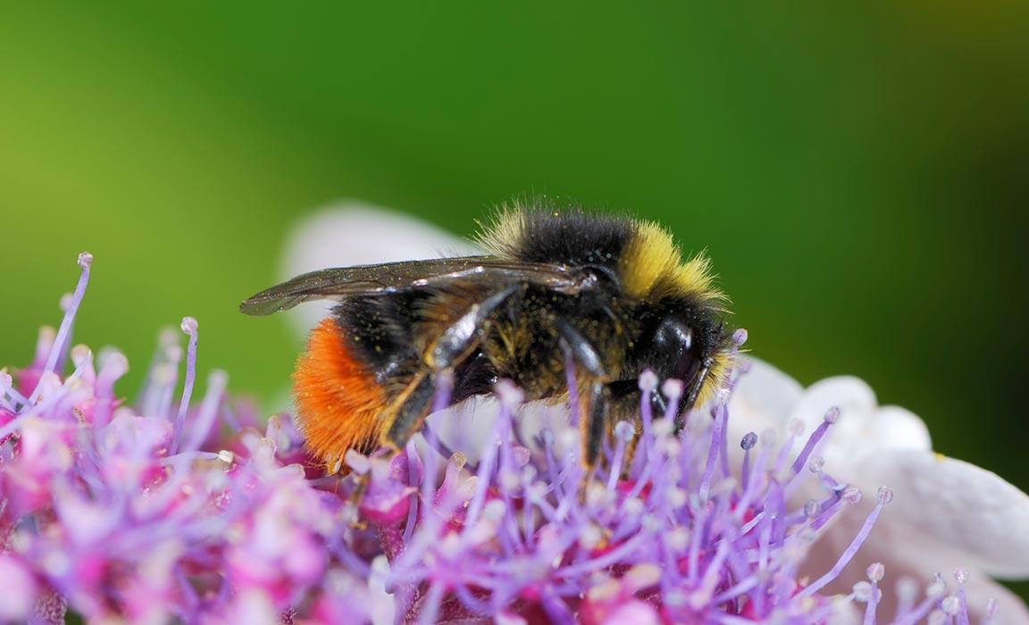 Amazing Health Benefits of Bee Pollen