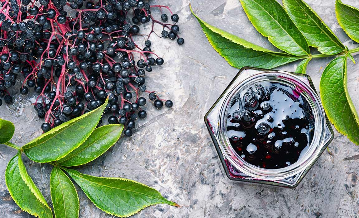 What is Elderberry?