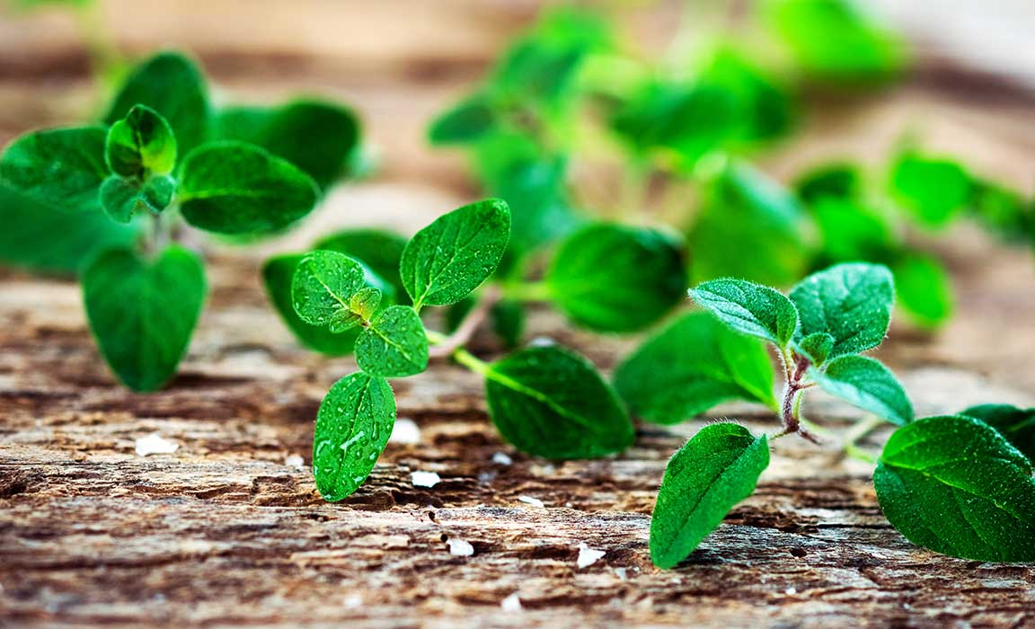 Medical Uses of Oregano & Colloidal Silver Are Vast