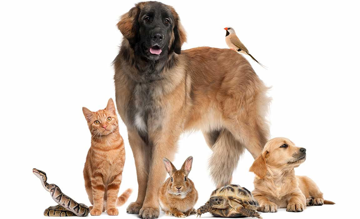 Find out how ALA, DHA and EPA plays a huge role in your pet's health