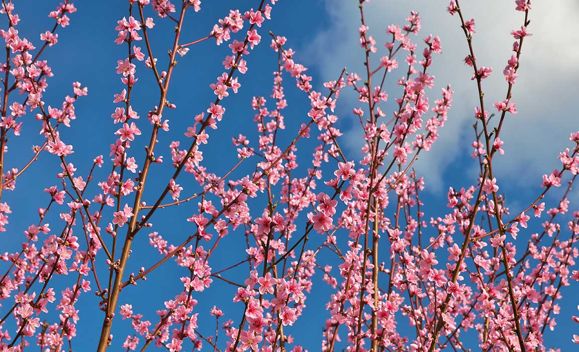 Spring has sprung….and so have your allergies!